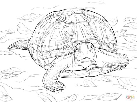 realistic ornate box turtle coloring page  printable