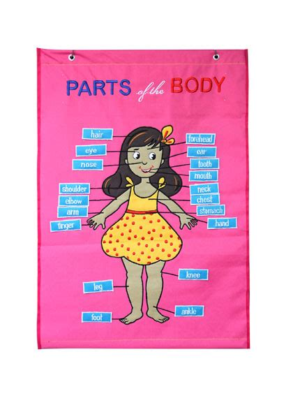 parts   body girl cloth chart charts unlimited