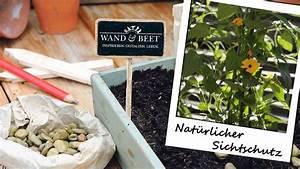 Sichtschutz Pflanzen Pflegeleicht : nat rlicher sichtschutz mit schnell wachsenden pflanzen ~ A.2002-acura-tl-radio.info Haus und Dekorationen