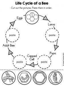 animal life cycle worksheet  kids crafts