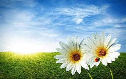 Flowers Wallpapers Windows Desktop Backgrounds Flower Nature
