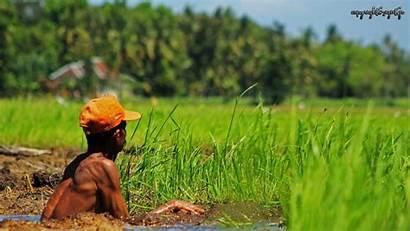 Pertanian Pangan Dampak Agribisnis Dalam Indonesia