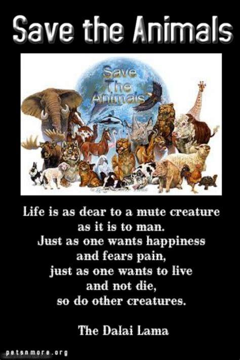 pets   inspiring quotes  people  love animals