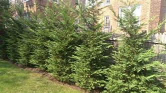 Privacy Screen Trees and Shrubs