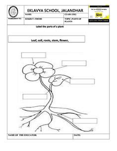 pre primary worksheets images worksheets india