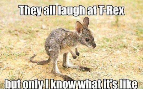 Kangaroo Meme - kangaroo meme picture webfail fail pictures and fail videos