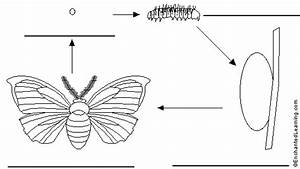 Label Moth Life Cycle In English  Printout