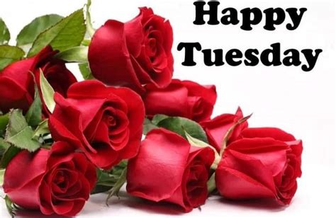 happy tuesday hd wallpaper images  pictures