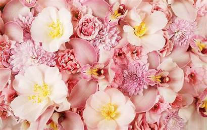 Orchid Wallpapers Pink