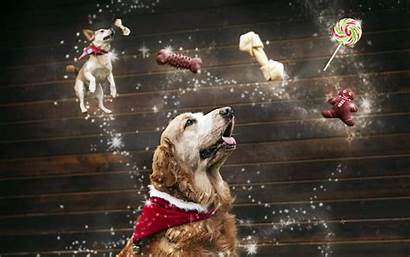 Christmas Dog Dogs Animal Doggy Wallpapers Background