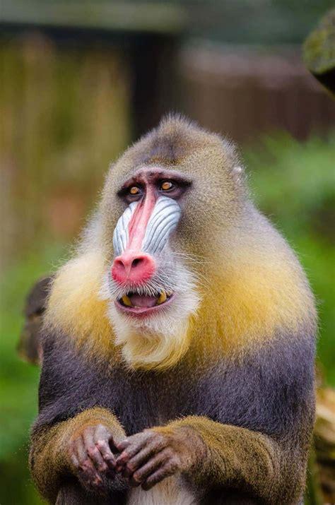 types  monkeys    world