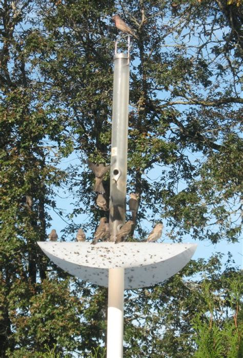 diy bird feeder pole wood work diy squirrel proof feeder pdf plans