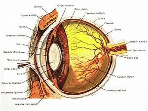 Dog And Cat Eye Diagram