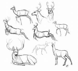 Deer sketches by NadiavanderDonk on DeviantArt