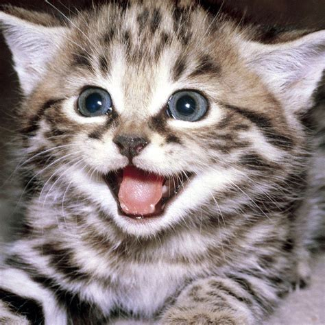 Funny Cats Videos (@catsvideosdaily) Twitter