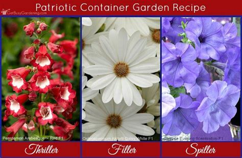 Recipes Patriotic Planting by 244 Best Flower Garden Ideas Images On 2018