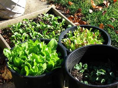Container Gardening Fall Garden Grow Containers Into