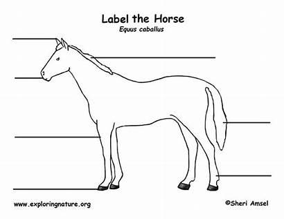 Horse Labeling Horses Animal Parts Label Exploringnature
