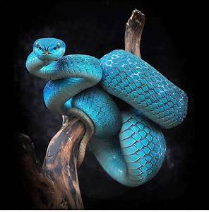 Pin by Jw Carroll on Art/craft Snake, Pit viper, Reptiles