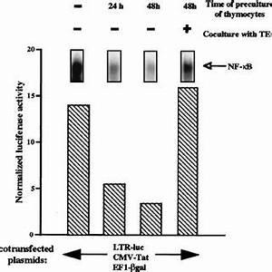 (PDF) High-Level Replication of Human Immunodeficiency ...