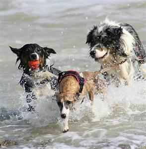 Vetranquil hond