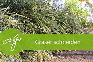 Wann Schneidet Man Gräser : gr ser schneiden mit dem fr hjahrsschnitt zum erfolg ~ Frokenaadalensverden.com Haus und Dekorationen