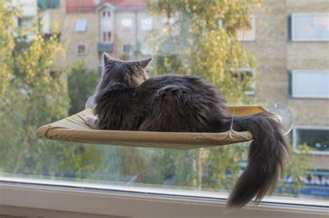 amache per gatti le amache per gatti modelli e recensioni a mici di chicco