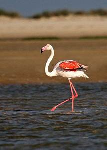 22 best images about PINK FLAMINGOS on Pinterest ...