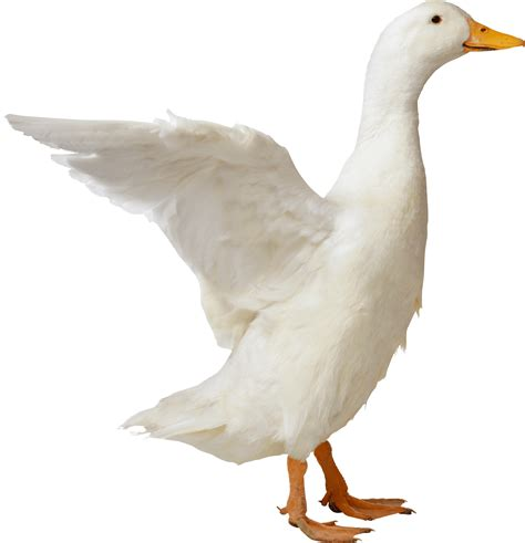 Goose Sideview transparent PNG - StickPNG