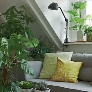 Pflanze Für Dunkle Räume : 11 zimmerpflanzen f r dunkle ecken pflanzen zimmer ~ A.2002-acura-tl-radio.info Haus und Dekorationen