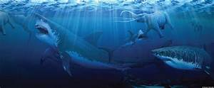 Megalodon, Prehistoric Shark, Called 'Apex Predator Of All ...