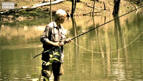 River Monsters Gifs  Find & Share On Giphy