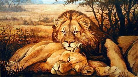 animals lion lioness relaxing hd wallpaper wallpaperscom