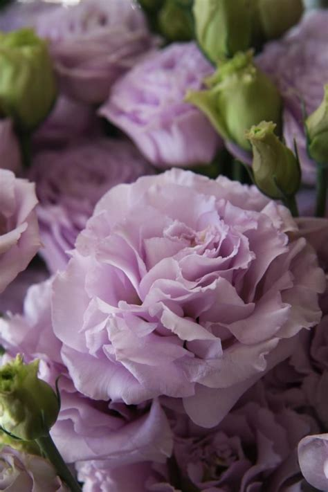 17 best ideas about purple flowers on purple wedding flowers purple lilac and
