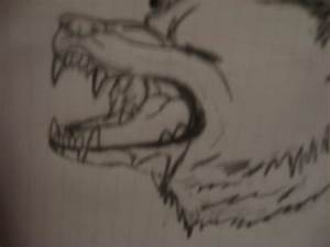lipscerhornment: anime wolf drawings