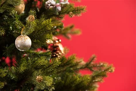 do real christmas trees have bugs ticks on your tree backyard bug patrol