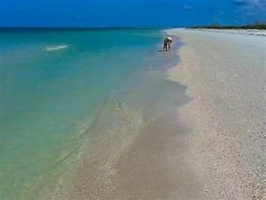 honeymoon island state park i love shelling With honeymoon island state park florida