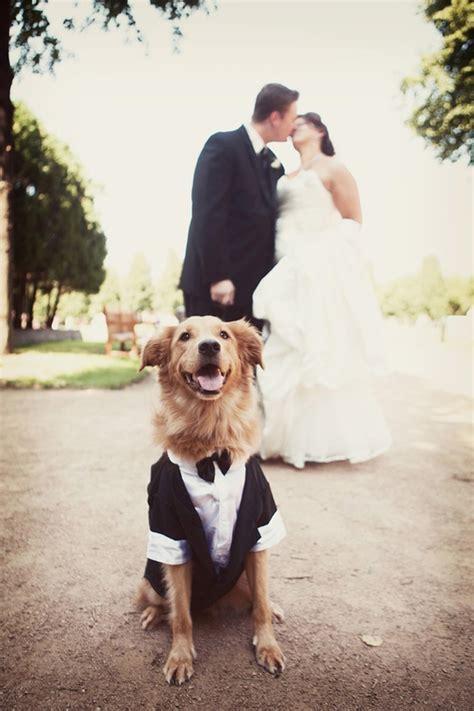 Top 5 Tips for Pets at WeddingsIvy Ellen Wedding Invitations u00ab Ivy Ellen Luxury Wedding ...