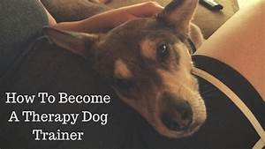 tips to become a therapy dog trainer the modern dog trainer With become a dog trainer