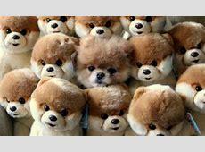 17 besten Hunde Bilder auf Pinterest Golden retriever
