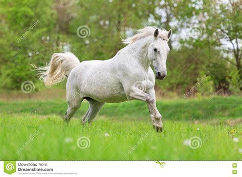 horse running summer meadow