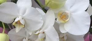 Orchidee Klebrige Tropfen : orchidee birchmeier spr htechnik ag ~ Lizthompson.info Haus und Dekorationen