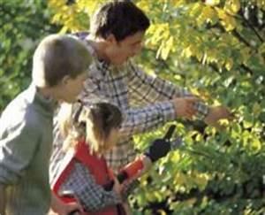Wann Schneidet Man Apfelbäume : alles rund ums thema gr n und garten ~ Lizthompson.info Haus und Dekorationen