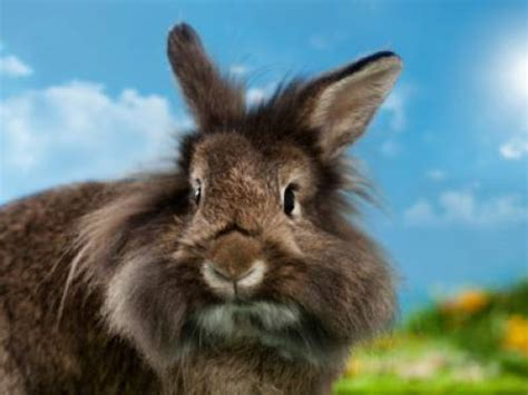warum haben hasen und kaninchen  lange ohren