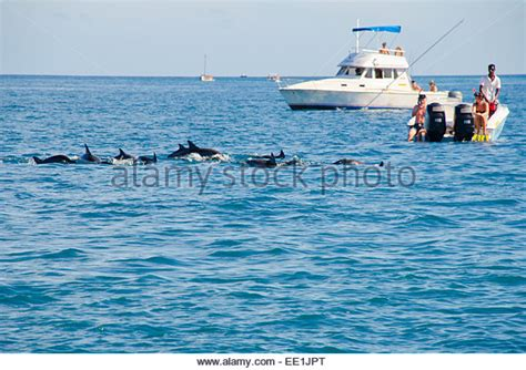 Dolphins Water Fast Stock Photos And Dolphins Water Fast