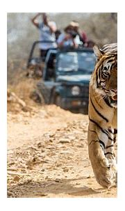 Plan a Jungle Safari Tour in Indian National Parks with ...