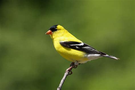 a to z the usa iowa state bird
