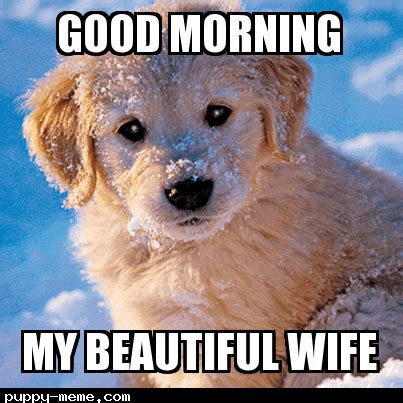 Good Morning Beautiful Meme - 20 good morning memes to brighten up your day sayingimages com