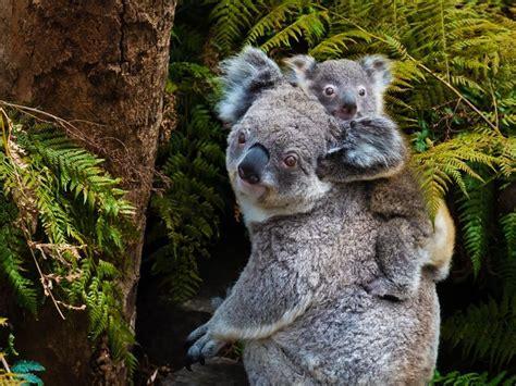 top  destinations  wildlife spotting  australia