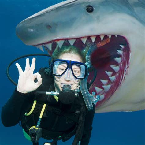 weisser hai angler trophaee lebensgross mit gruselgarantie